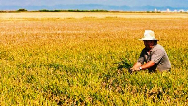 Situación de la producción mundial de arroz, resultados de 2019